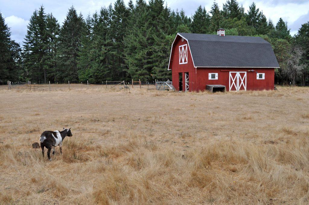 goat-barn_mf
