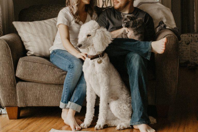 do you need pet insurance